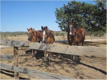 $167,500 Horse Friendly 10 Acres